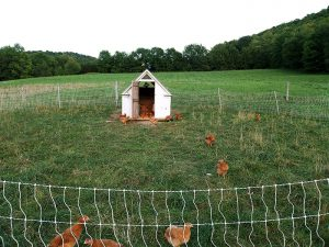 Brawley Made Vermont Farm Chicken Coop