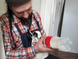 Brawley Made Feeding Baby Goat