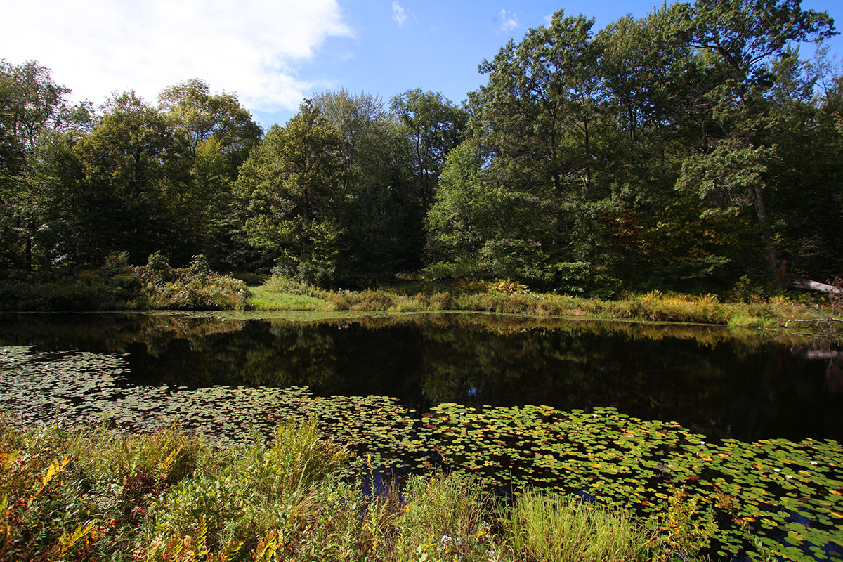 Marsh-Whitlock House Pond